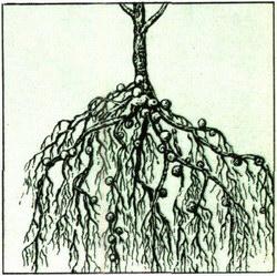 Сказка о корнях -гор- и -гар-