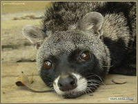Любимые сказки о животных  диких и домашних